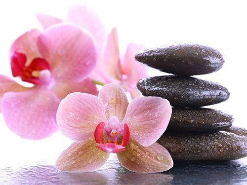 stones_orchid_closeup_465121-2